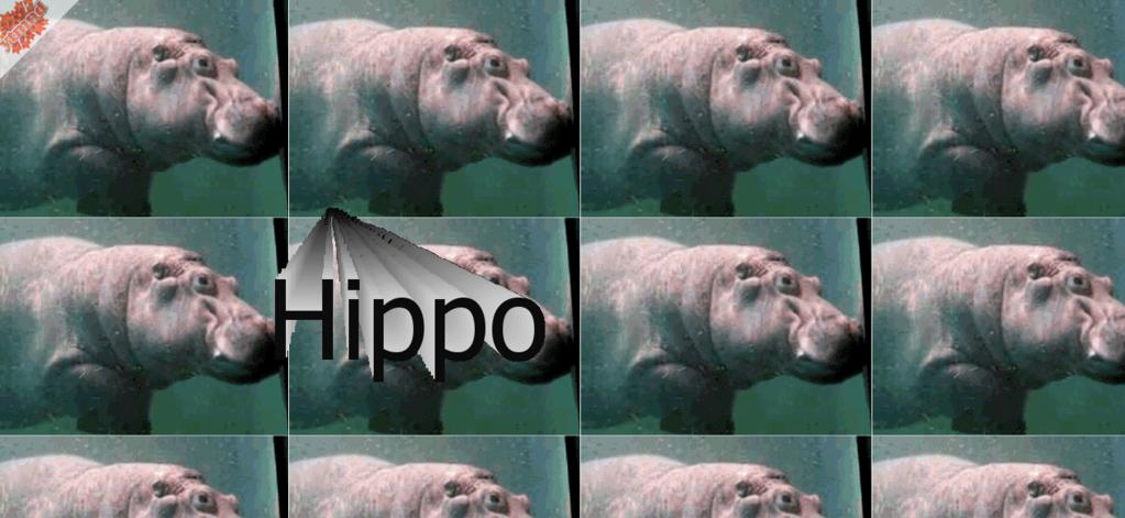 HippoHippo.ytmnd.com